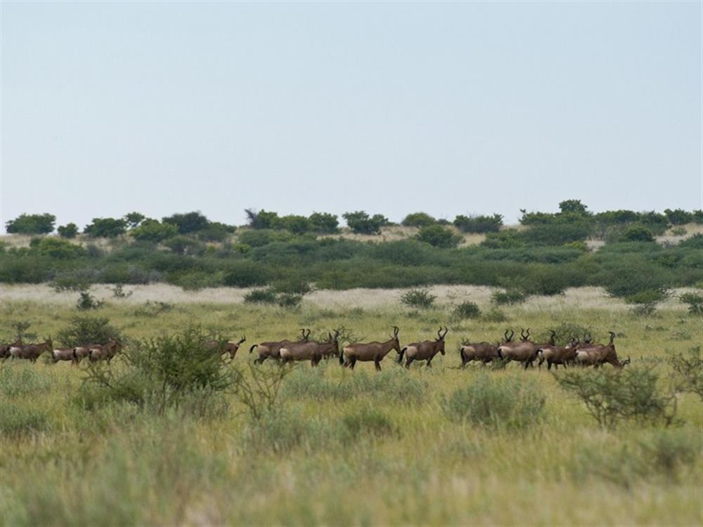 Kalahari Plains