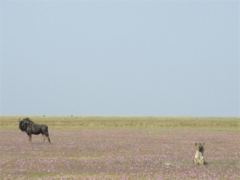 Liuwa Plain with Robin Pope