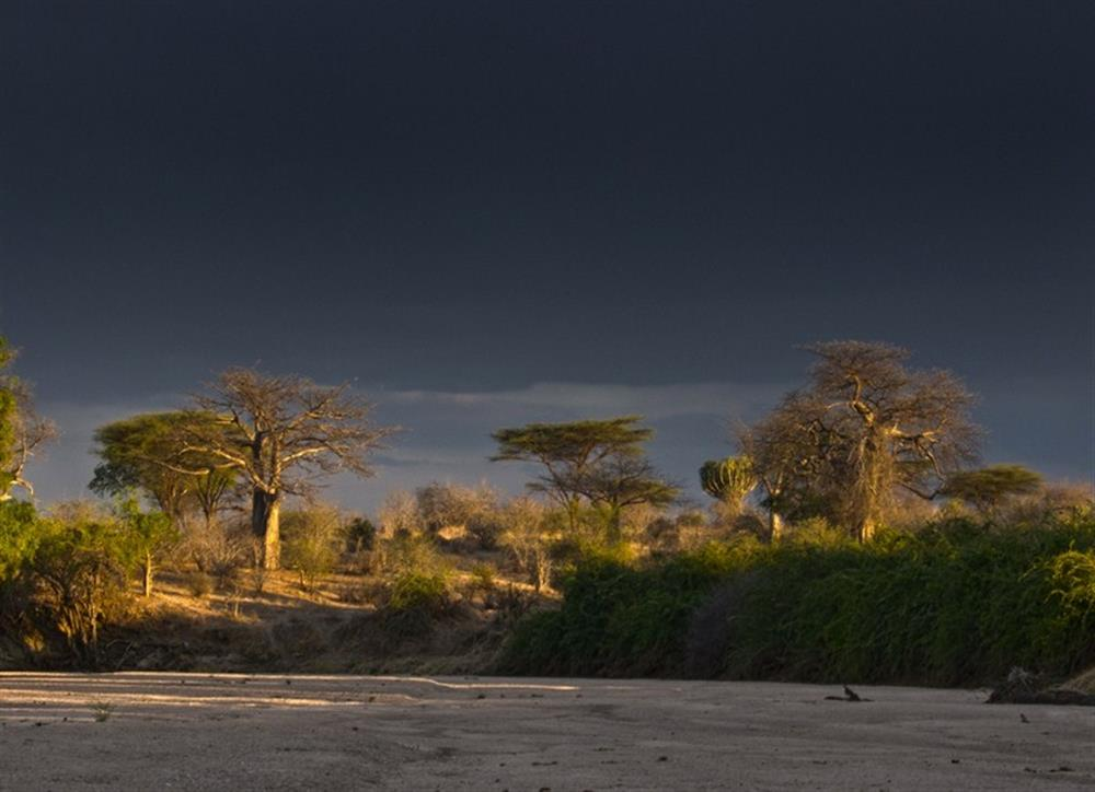 Mwagusi Safari Camp