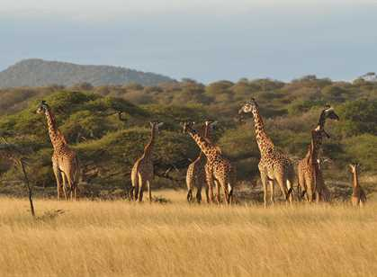 Tsavo East & West